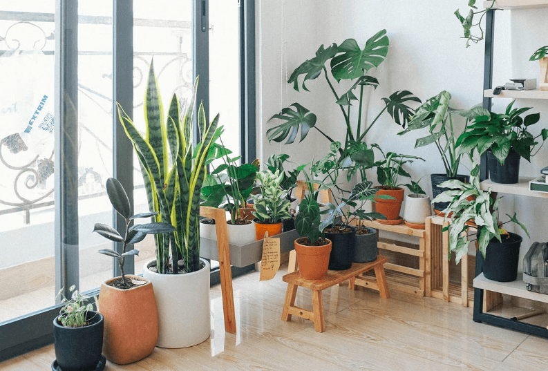 Pots and planters aren't enough; give your leafy buddies platforms.